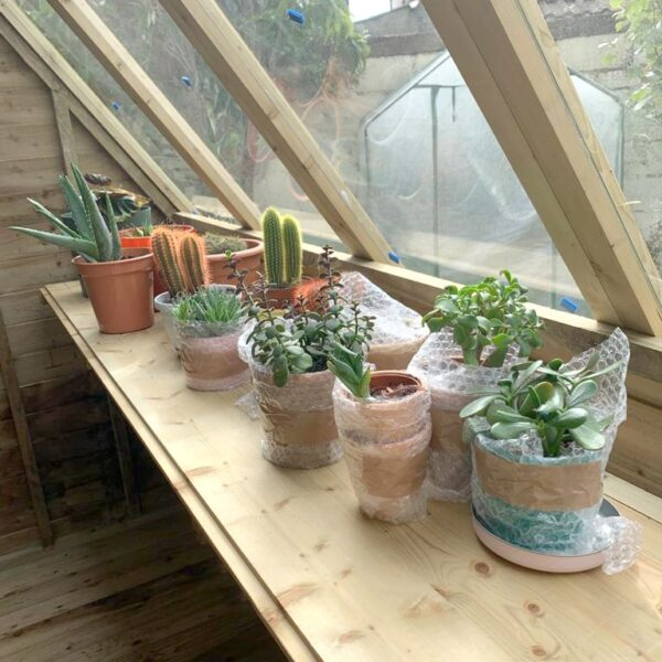 The inside shelf of the potting shed. It is about a foot wide and it sits right under the window at about the average person's waist height. In this image there are 12 various succulents in pots along the window. The glass is clean and through it you can see the plastic glasshouse on the other side of the garden