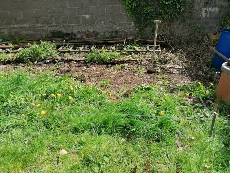 a patch of grass that has 4 stakes around it in a rectangle denoting this is the area that the shed will occupy. It's grassy and mucky and covered in weeds