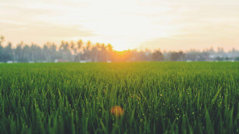 A grass field at sunset