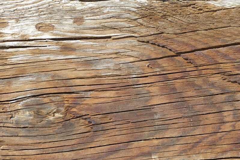A macro photo of some Warped Timber
